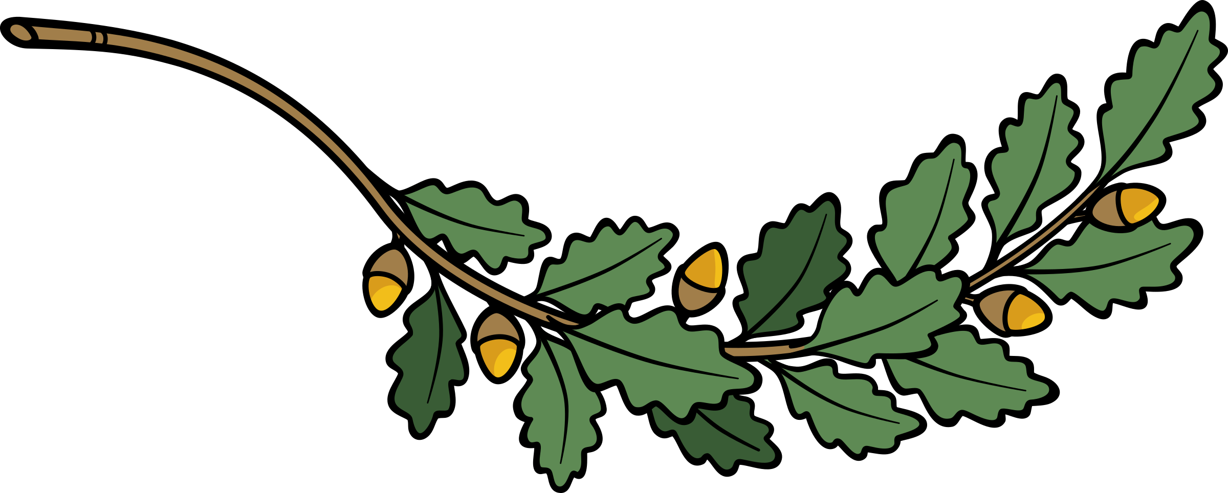 clip library library Oak clipart. Branch big image png