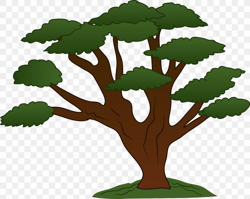 clip art royalty free Clip art png x. Oak clipart deciduous tree