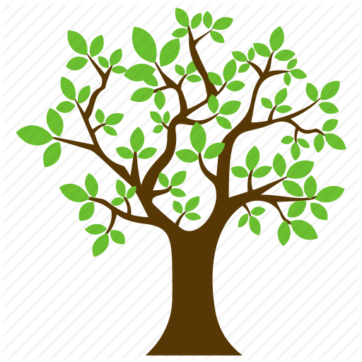 clip art free download Oak clipart deciduous tree. Transparent png free download.