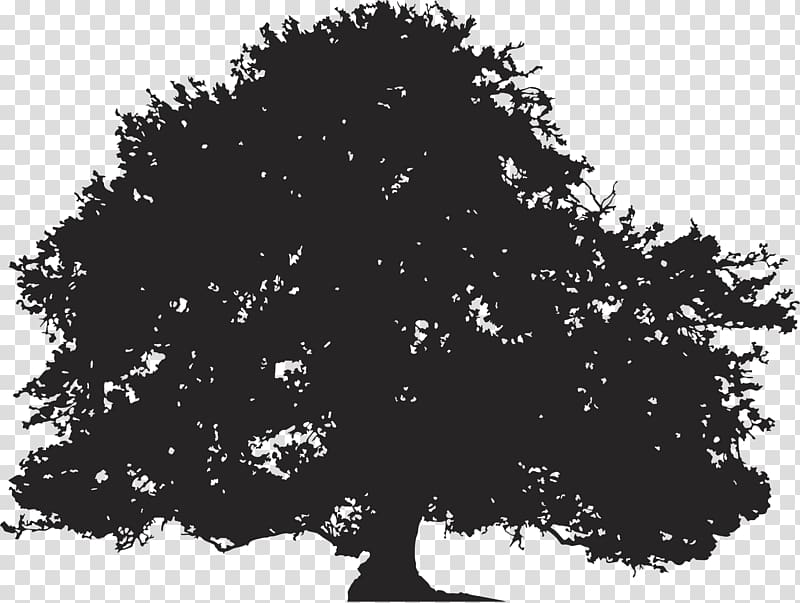 picture freeuse stock Oak clipart deciduous tree. Silhouette illustration .