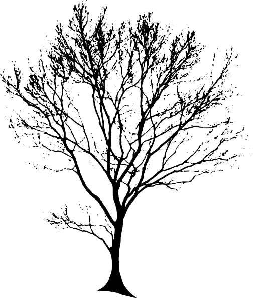 vector Oak Tree Drawings