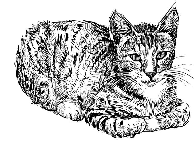 clip download Cat Kitten Drawing