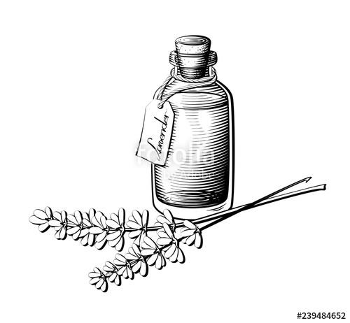 clipart transparent Vector bottle black and white. Lavender oil illustration essential