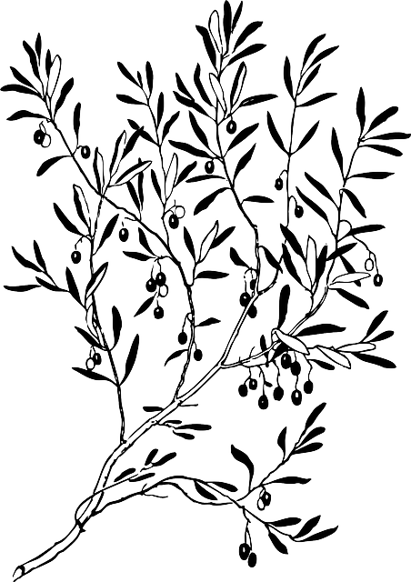 jpg stock Olive branch wreath clipart. Drawing at getdrawings com