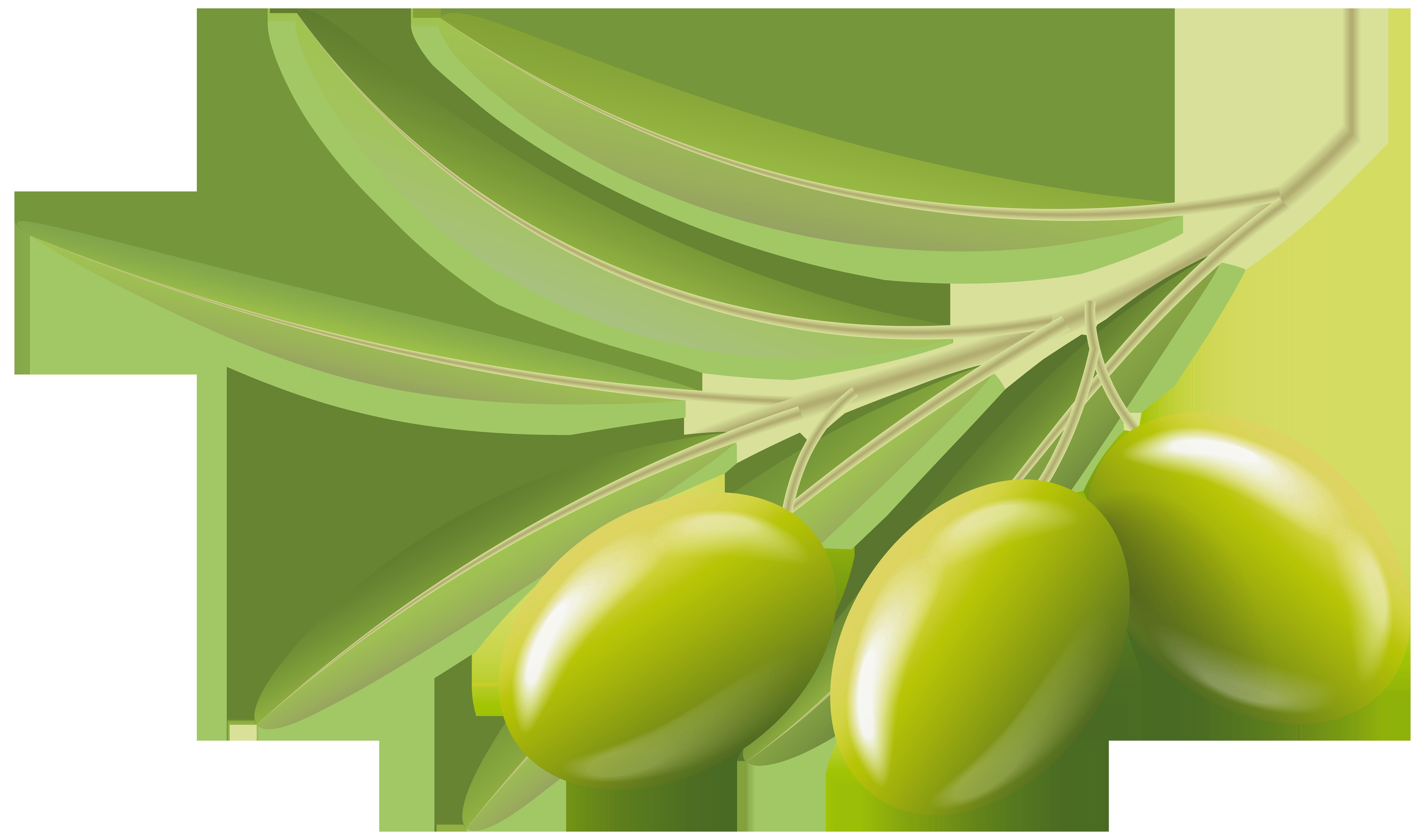 graphic transparent download Green olives transparent clip. Olive clipart