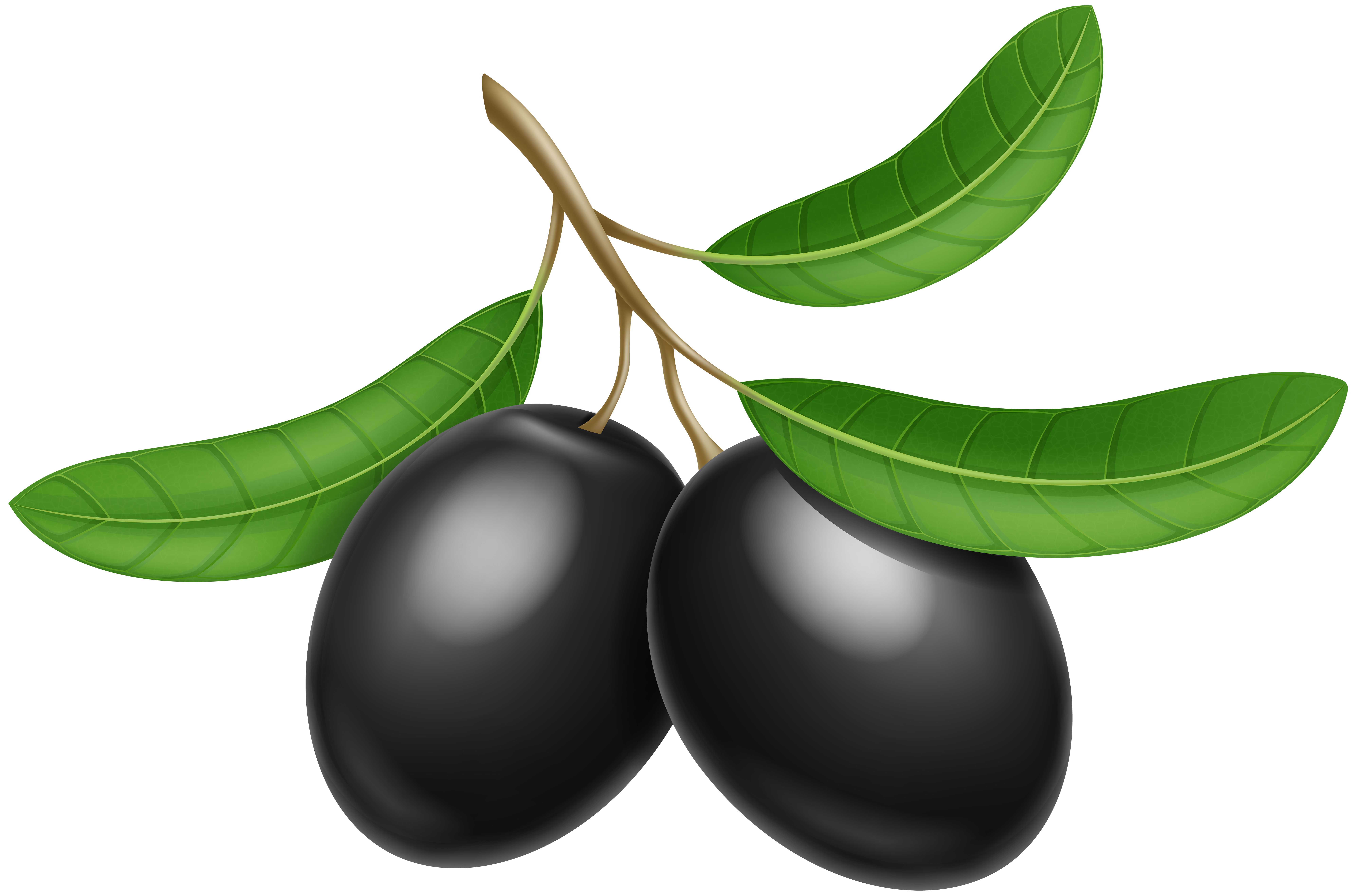 clip transparent Olive clipart.  collection of black