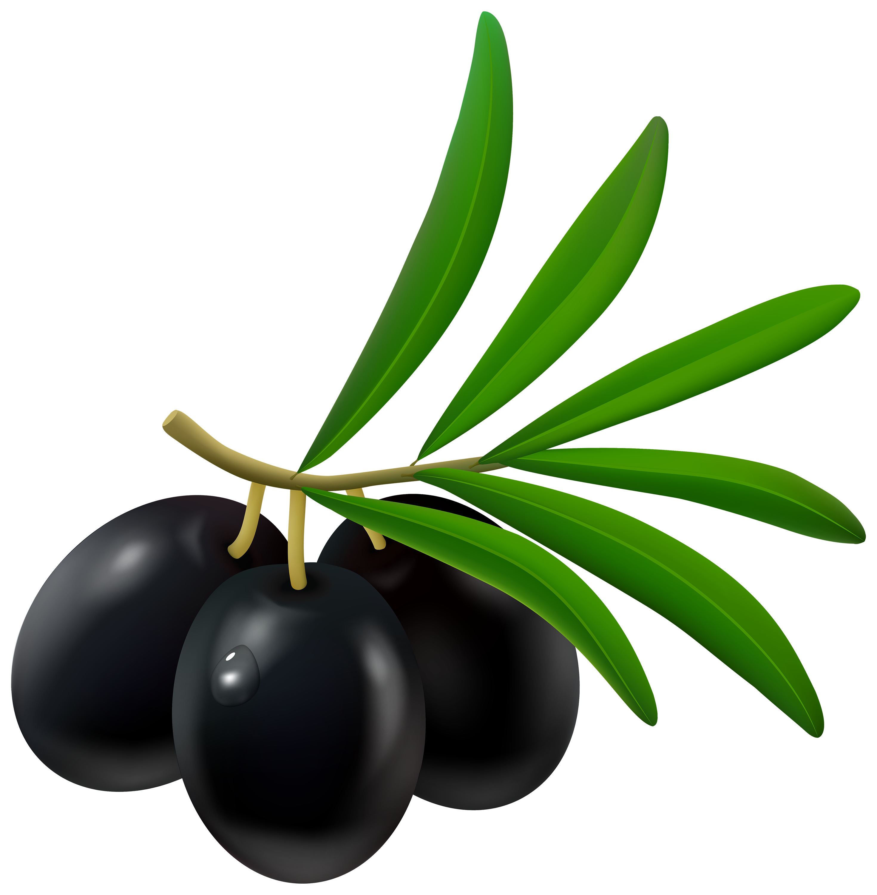 clip art freeuse library Black png best web. Olive clipart