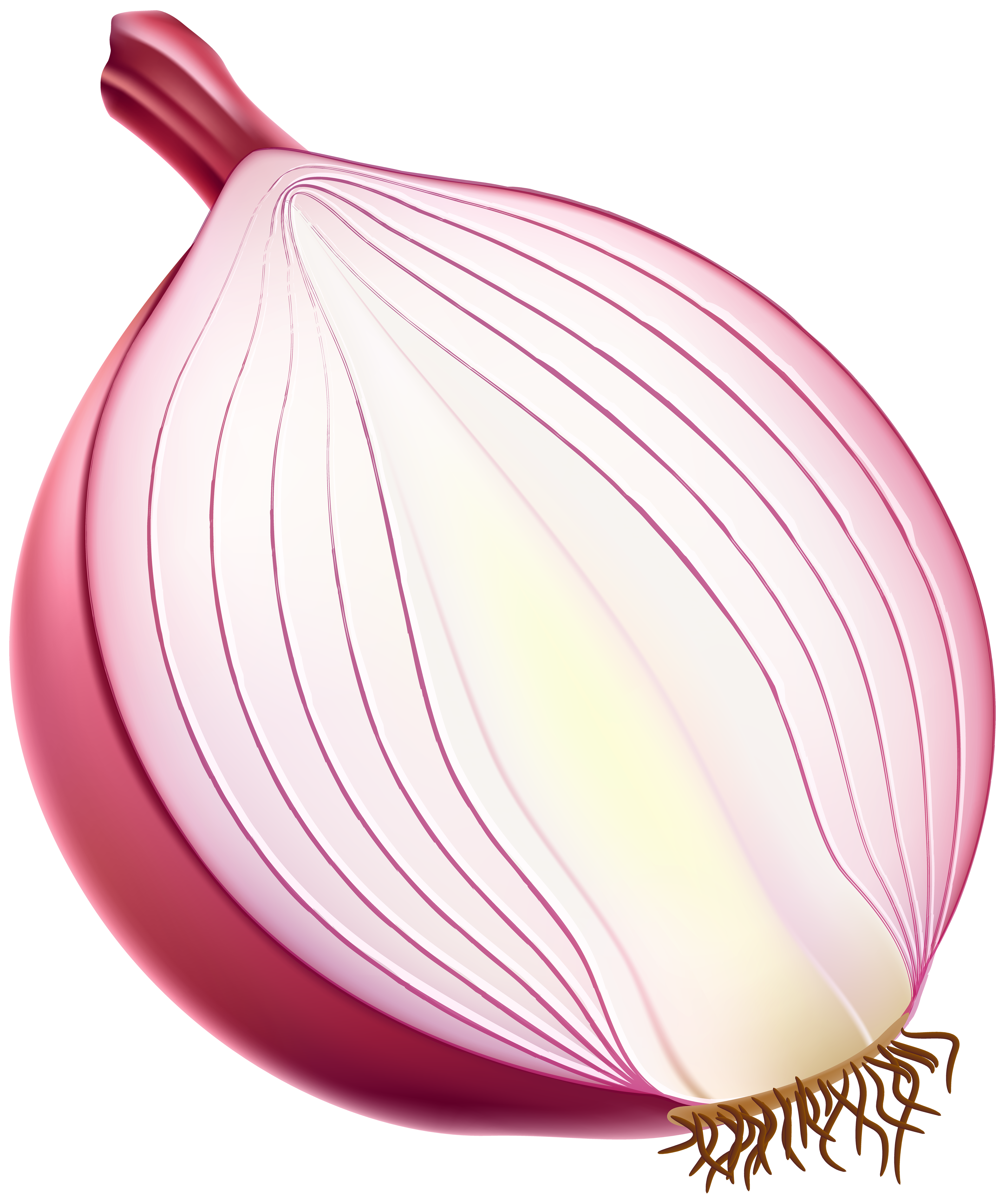 clip library stock Half red png gallery. Onion clipart.