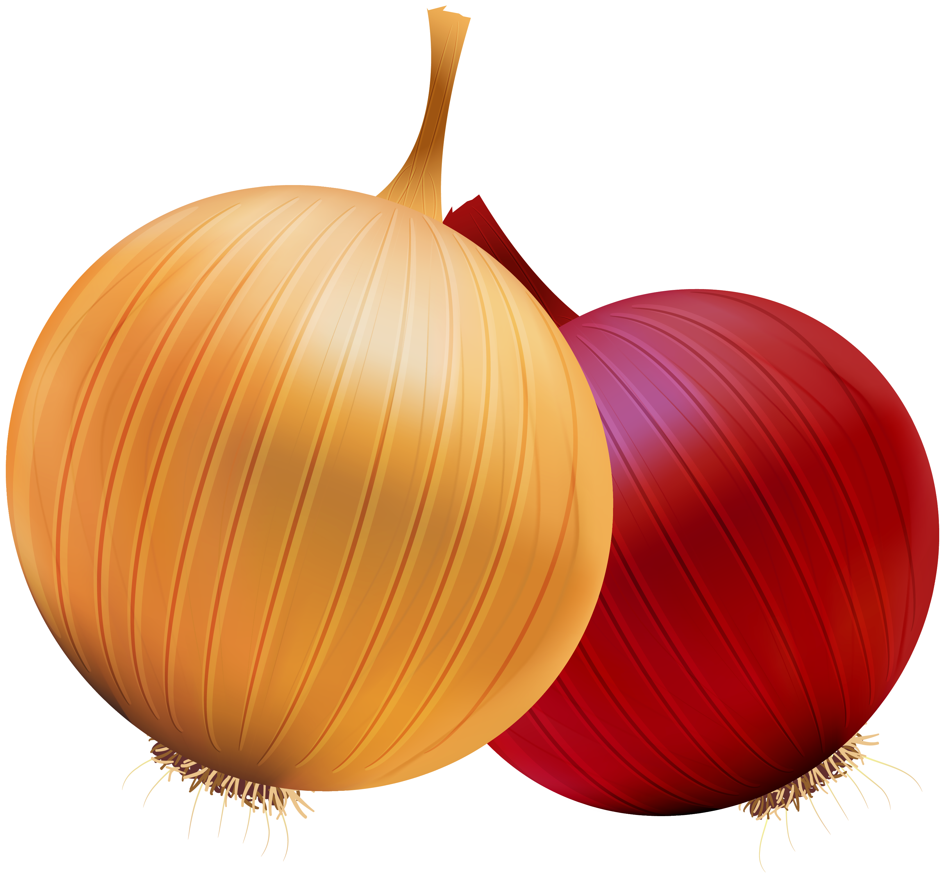 clip art free stock Onion and Red Onion PNG Clipart