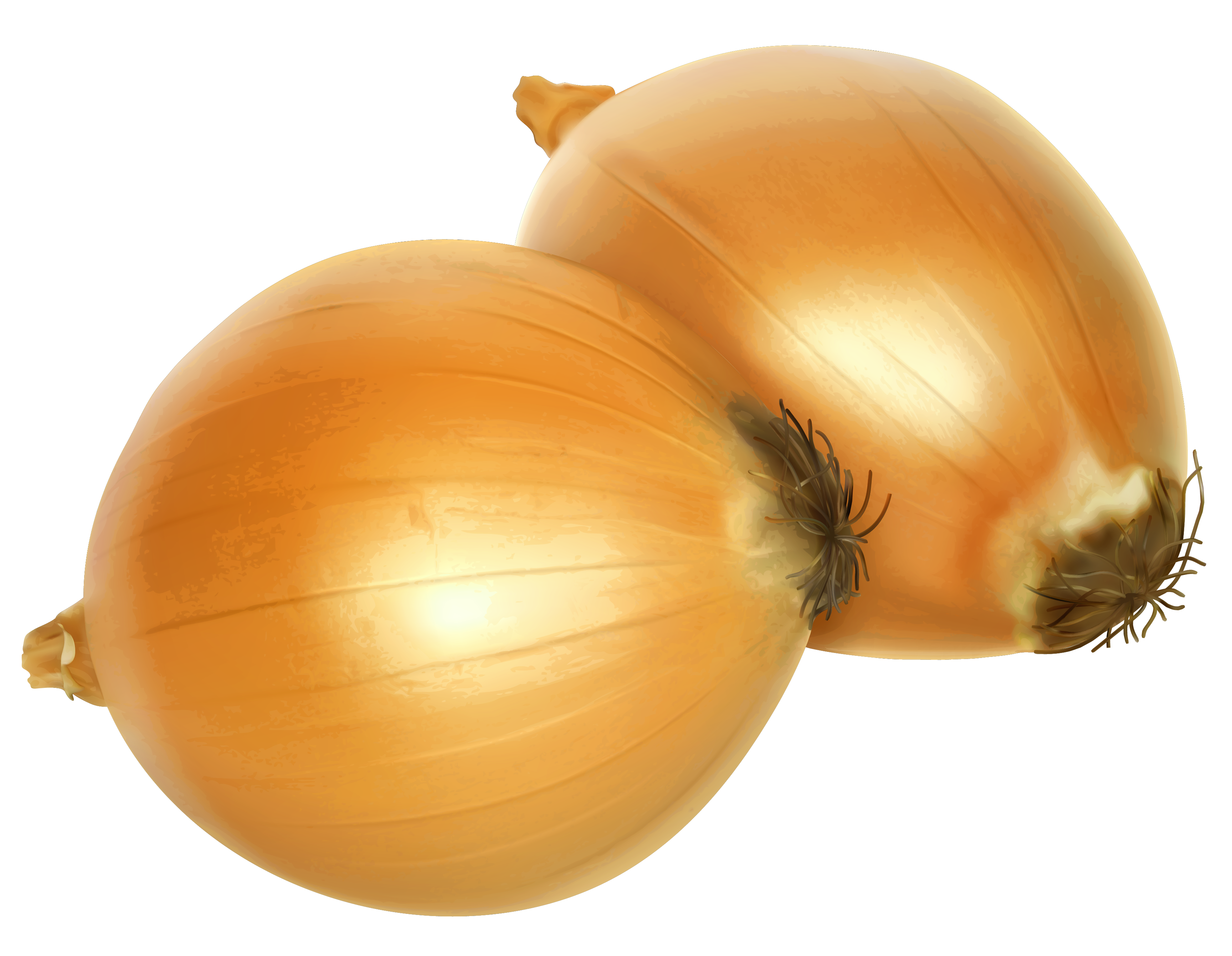 clip art royalty free download Png gallery yopriceville high. Onion clipart.