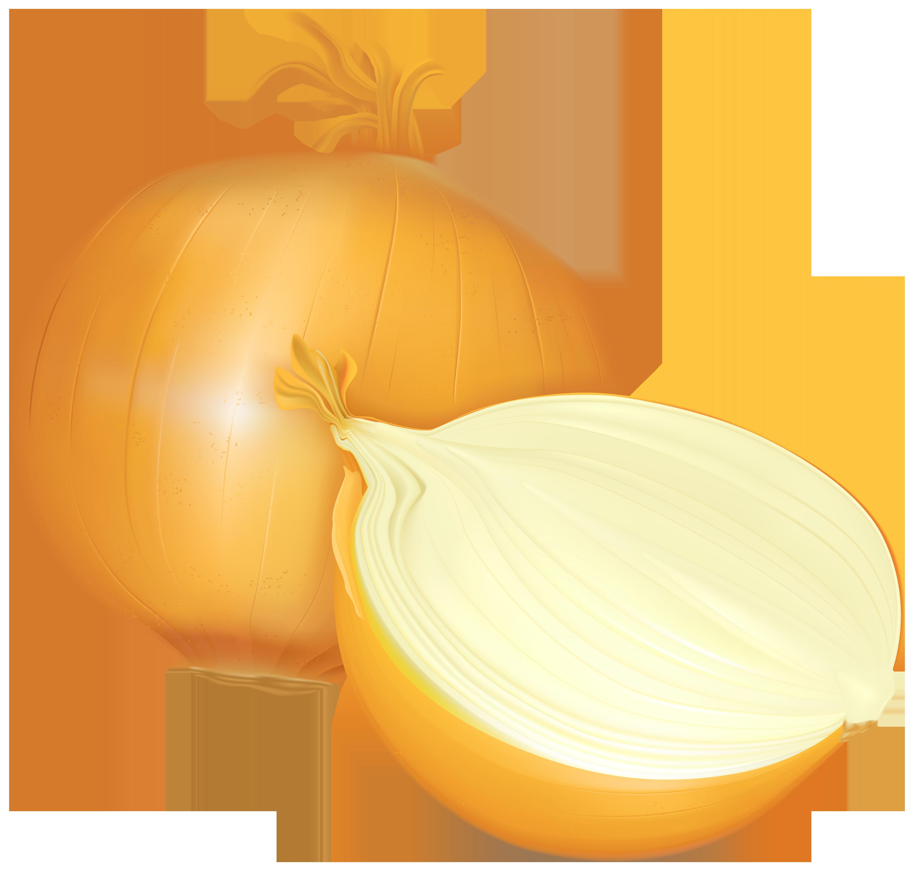 clip transparent Onion clipart. Png best web.