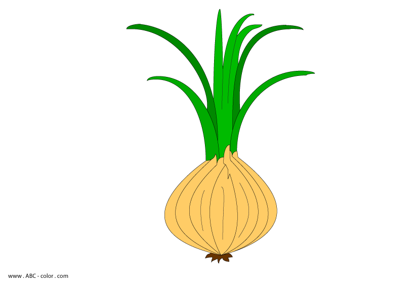 image free onion raster clipart
