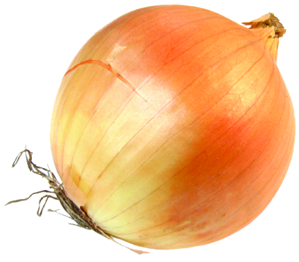 svg free library Onion PNG Transparent Images