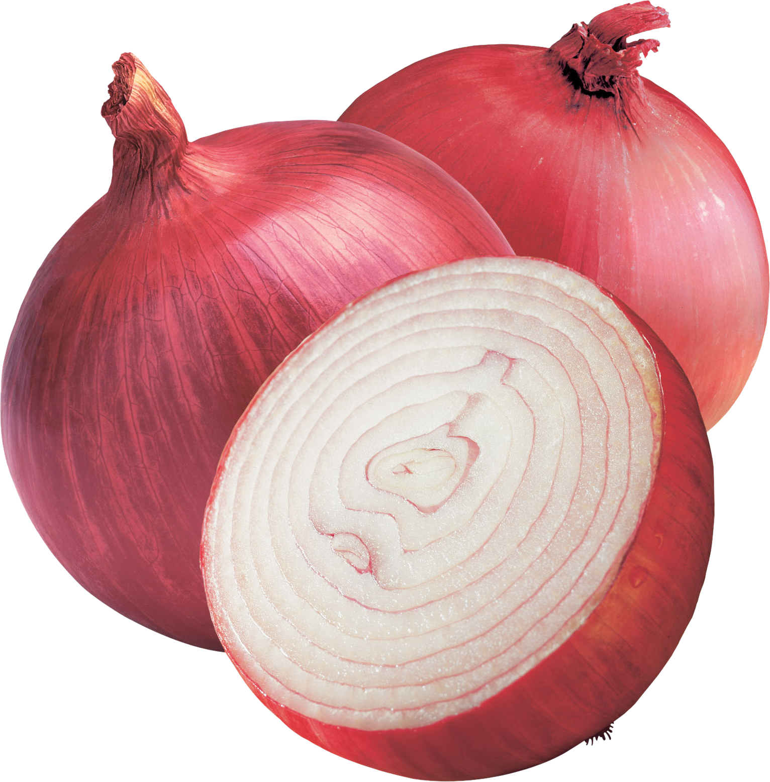 png black and white library HQ Onion PNG Transparent Onion