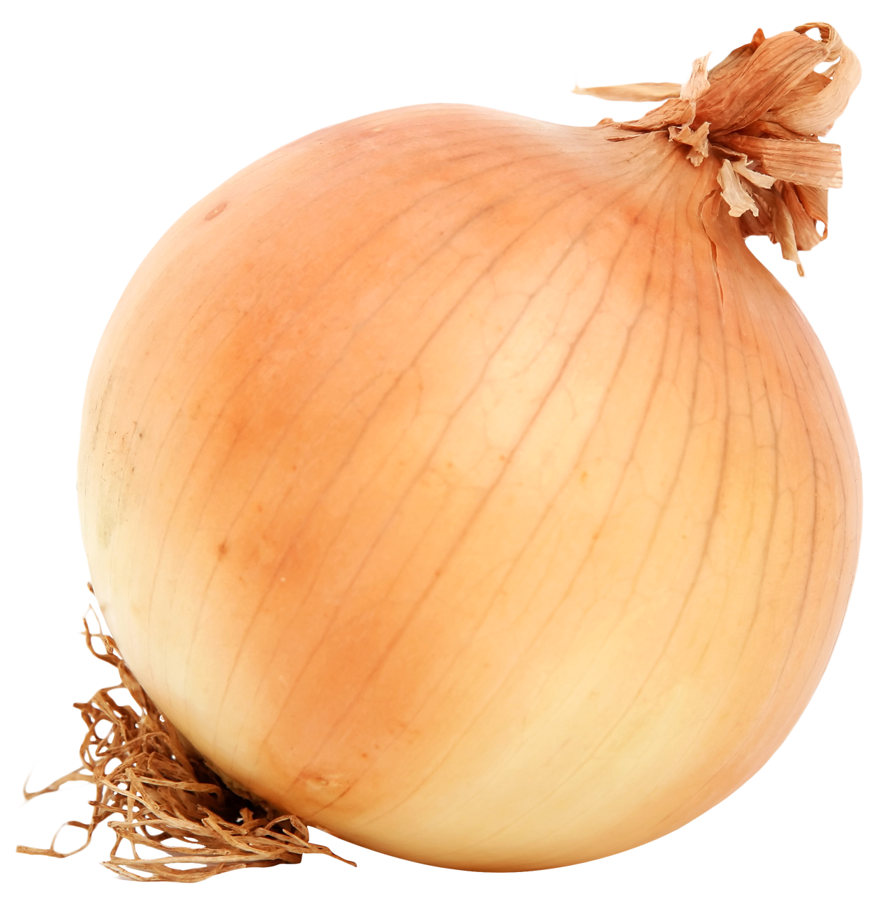 jpg Brown Onion PNG Image