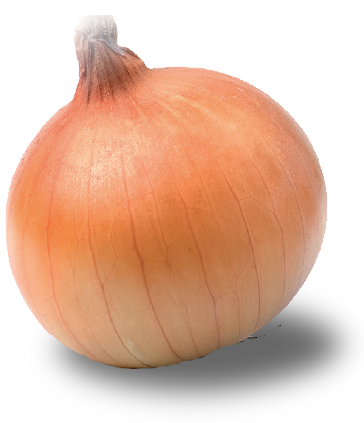 vector royalty free stock Onion Seeds by ICS
