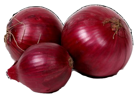 vector royalty free library onion transparent jumbo #100624351