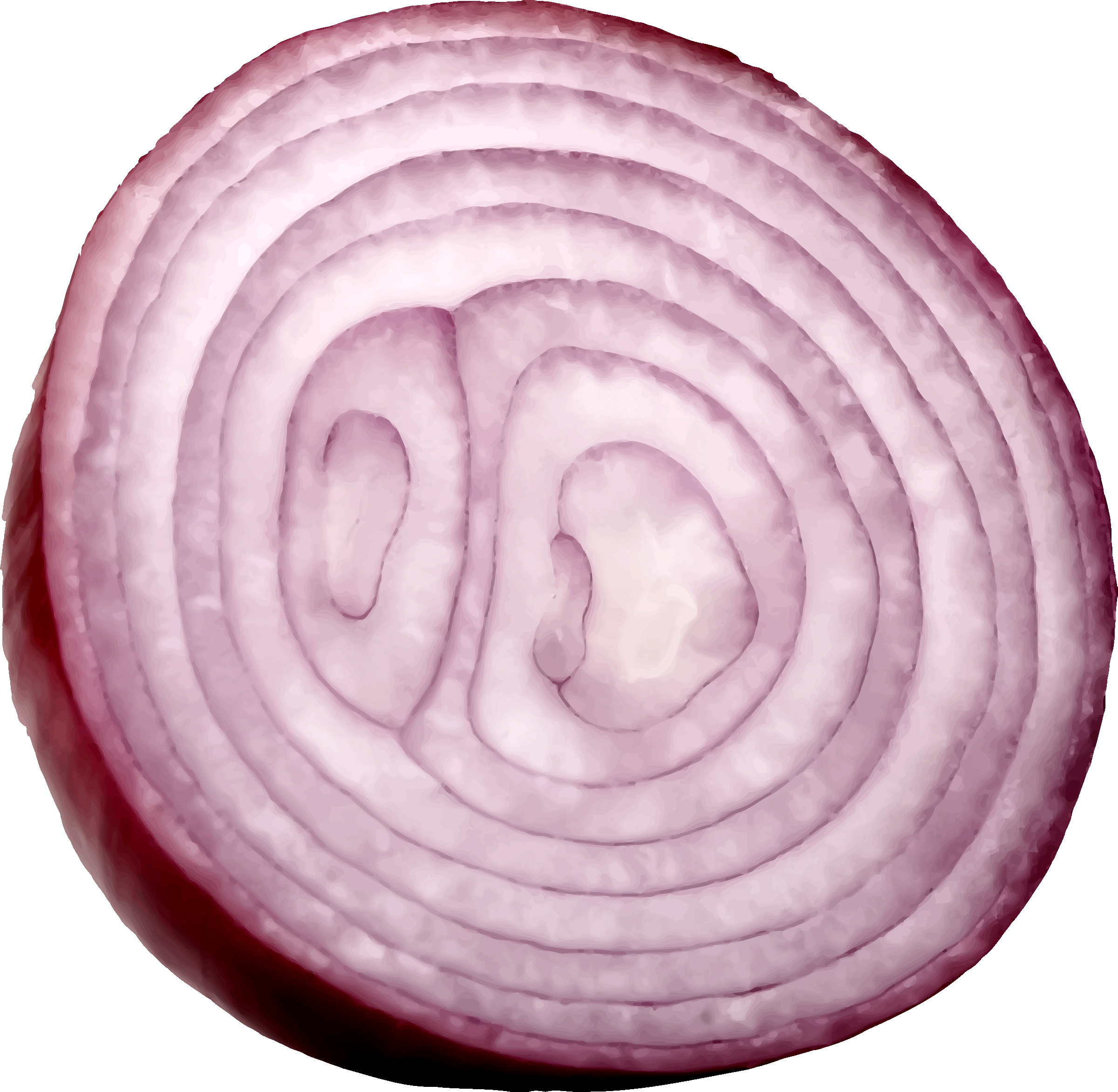 vector free stock Slice onion png