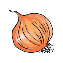 vector free Png Onion Vector