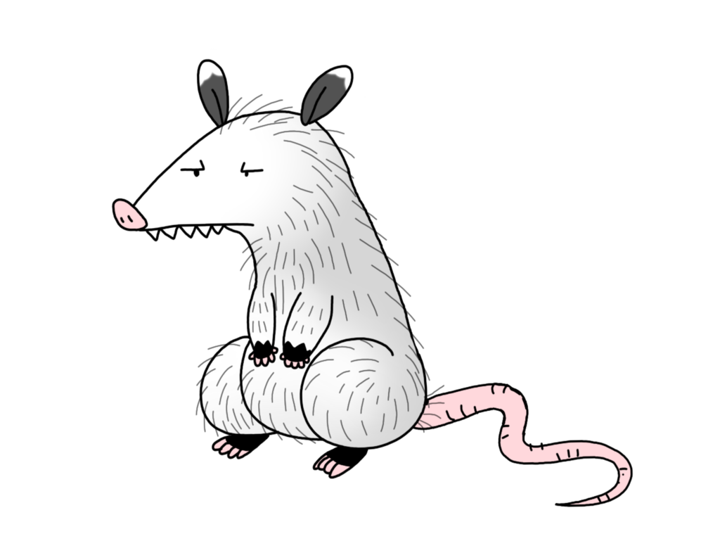 freeuse download Opossum by Spice