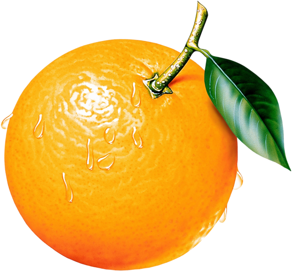 image library library Orange Clipart Picture