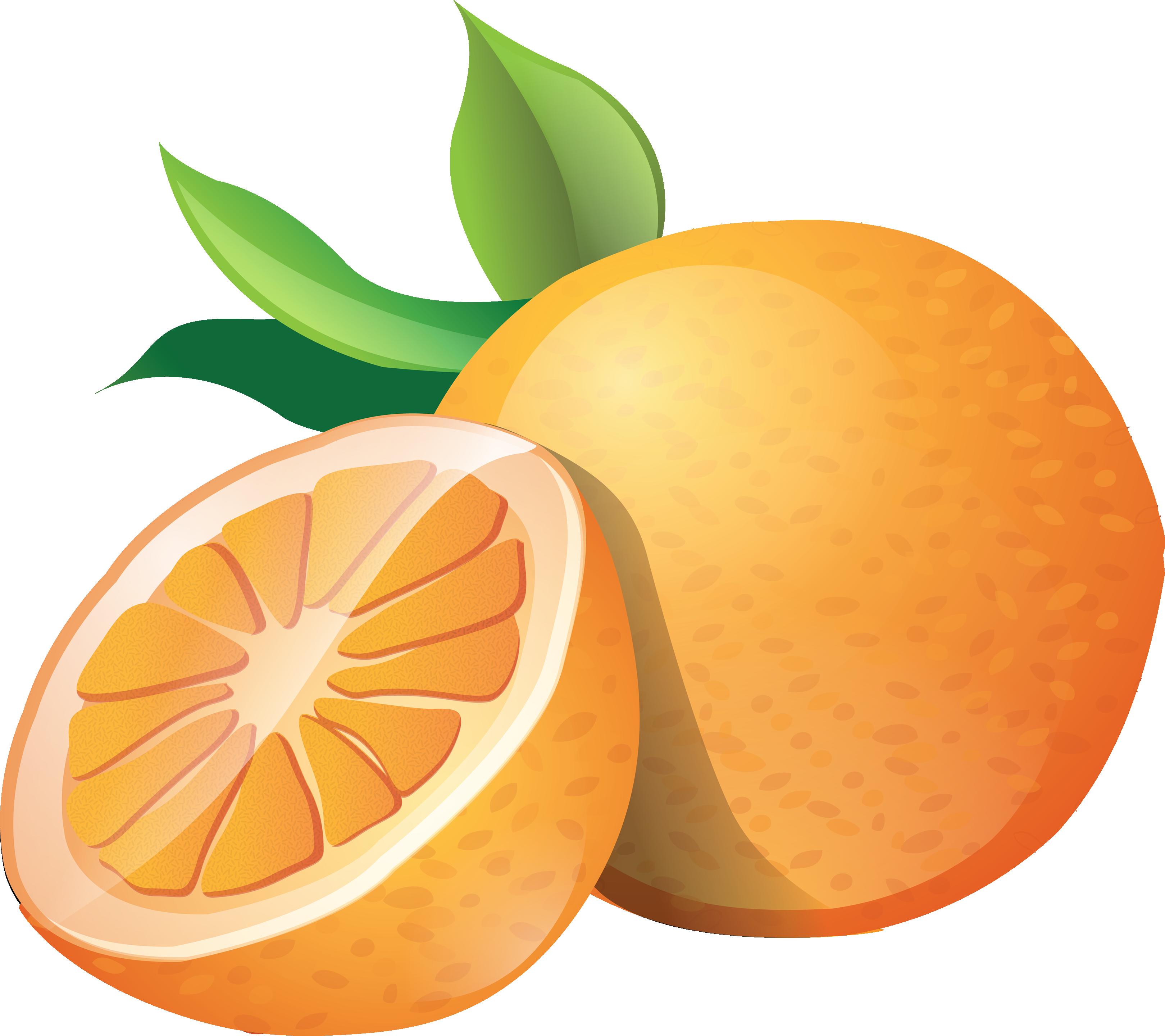 clip art black and white Oranges clipart. Free orange cliparts download