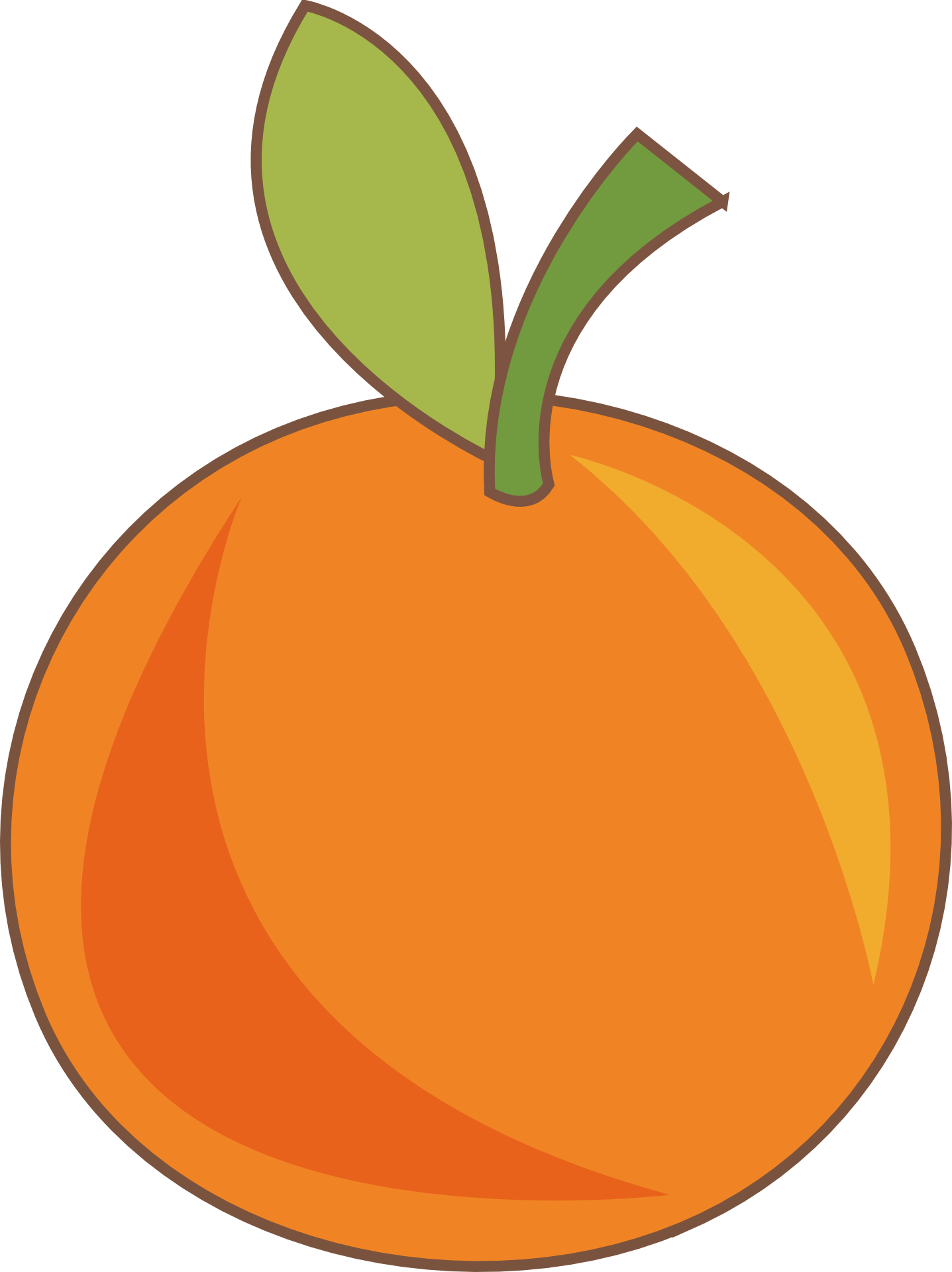 vector transparent Orange Fruit Drawing at GetDrawings