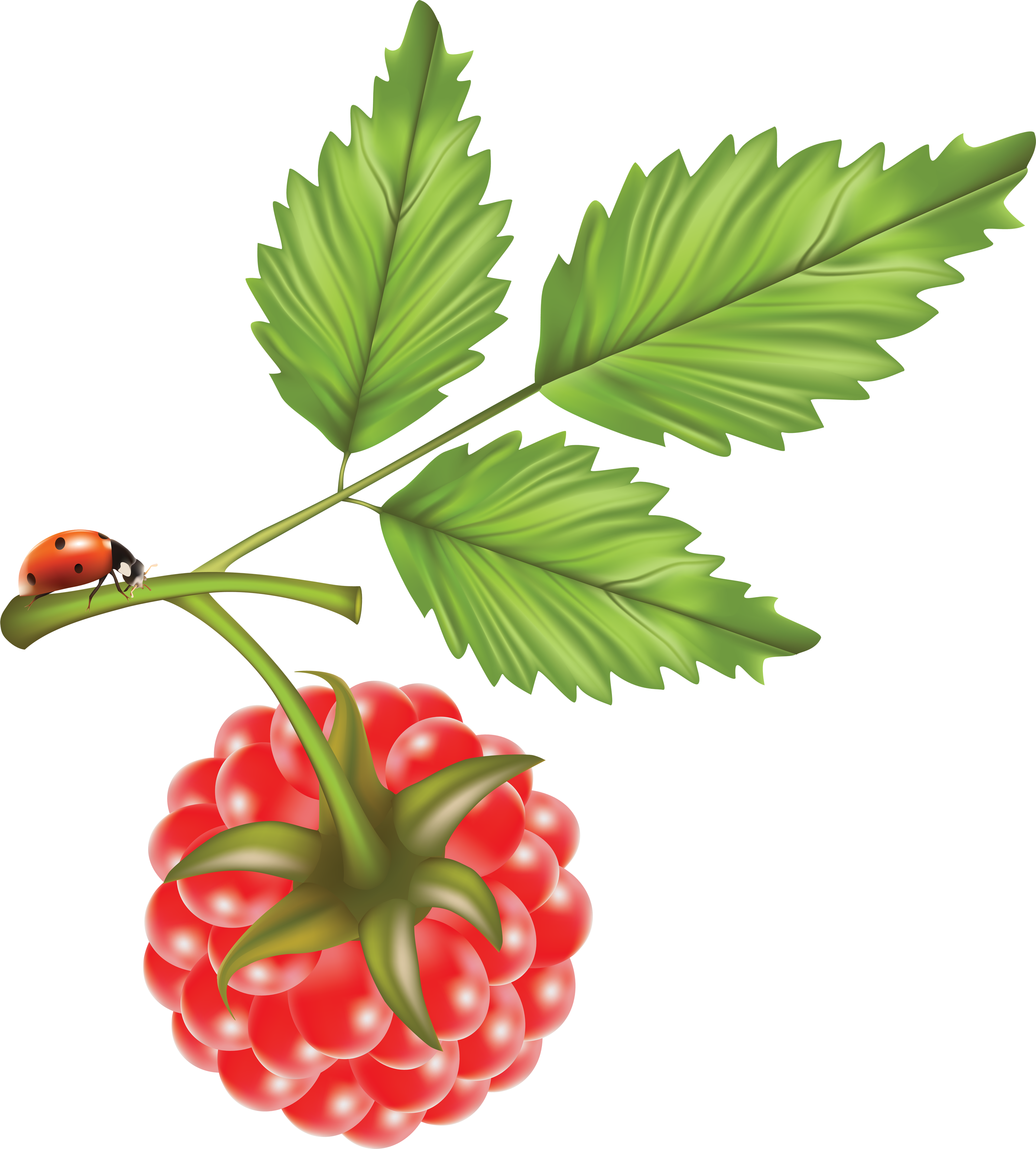 png free stock Rraspberry PNG image