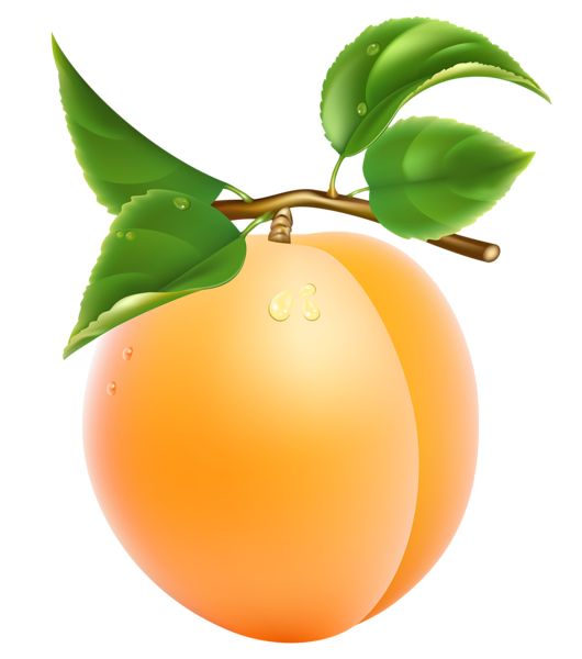 svg library download Apricot Transparent PNG Clipart Picture