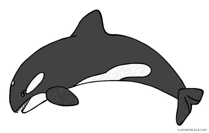 clipart freeuse library Orca clipart. Transparent free on dumielauxepices