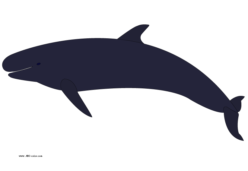 vector library library Beluga whale clipart. Killer shamu free on.
