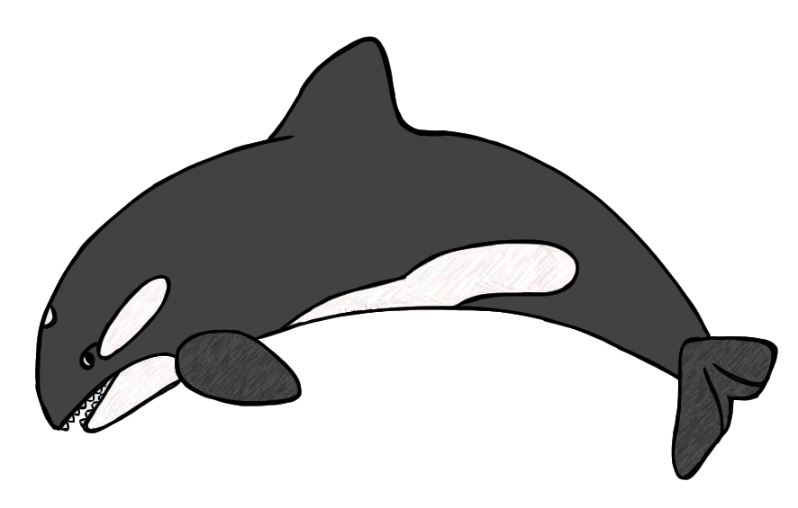 black and white stock Black and white dromgcb. Killer whale clipart