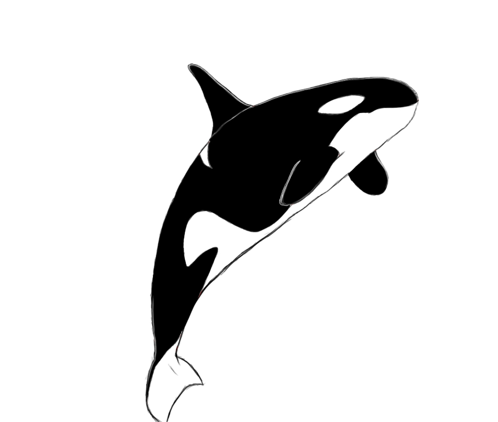 png black and white library Free cartoon killer download. Orca whale clipart
