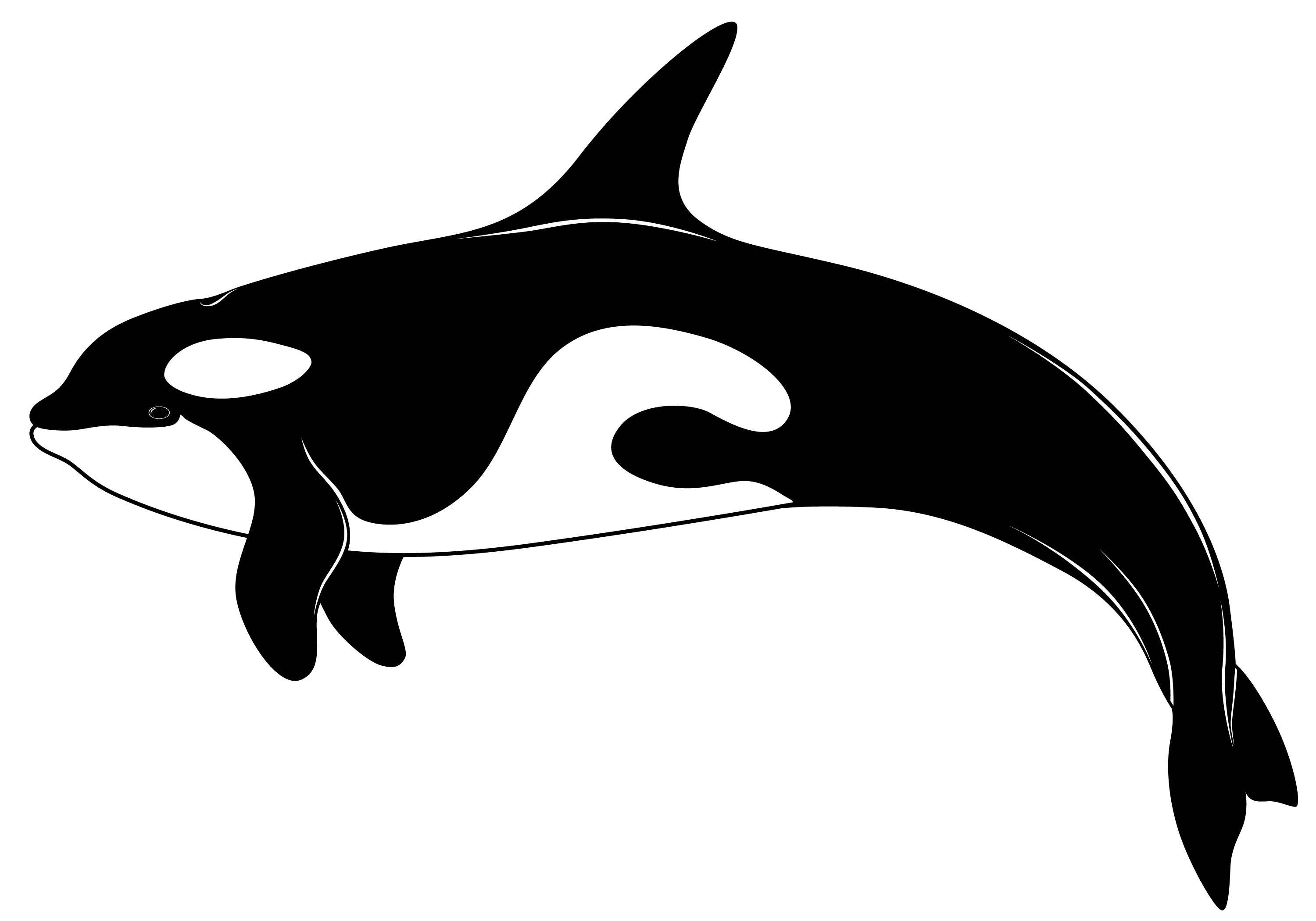 black and white stock Orca whale clipart. Free download best