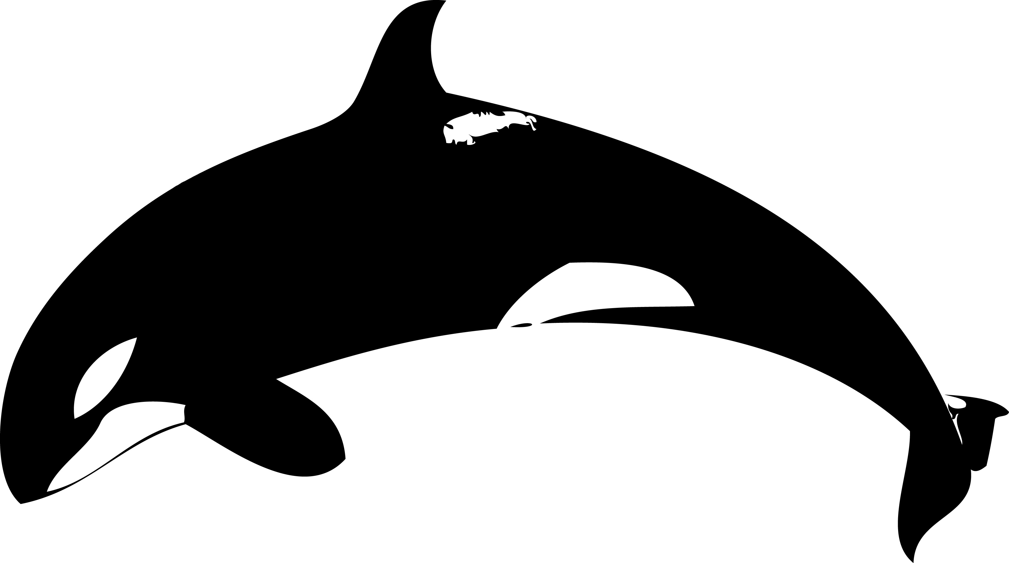 clipart freeuse library Free orca black and. Killer whale clipart