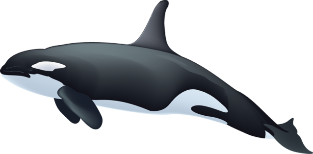 graphic black and white library Rianfil killerwhaleclipart. Killer whale clipart