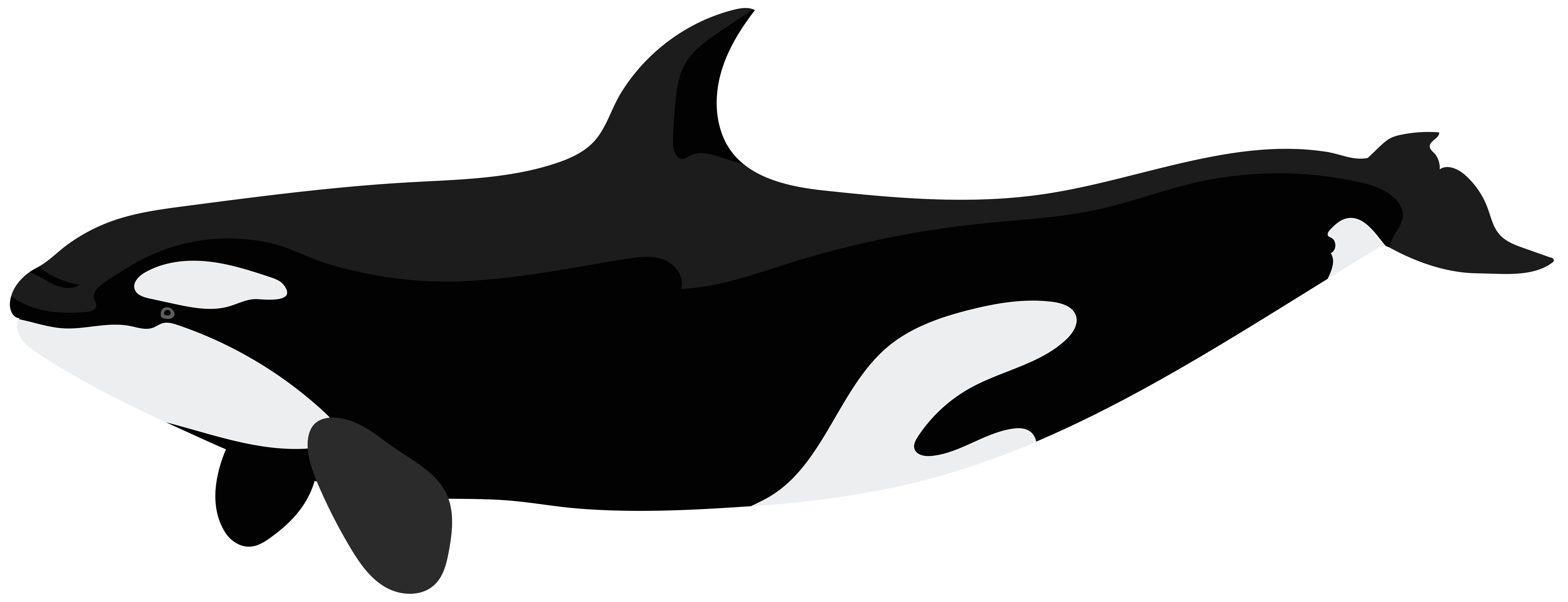 png black and white Orca clipart. Png clip art image.