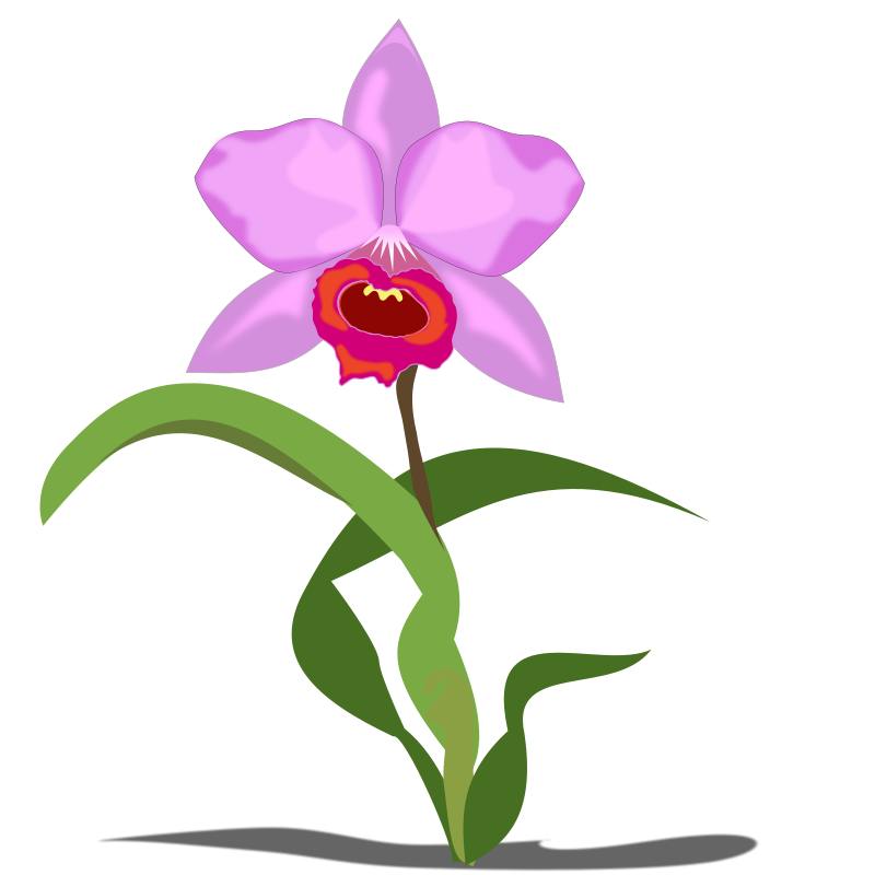 image royalty free library Free cliparts download clip. Orchid clipart.