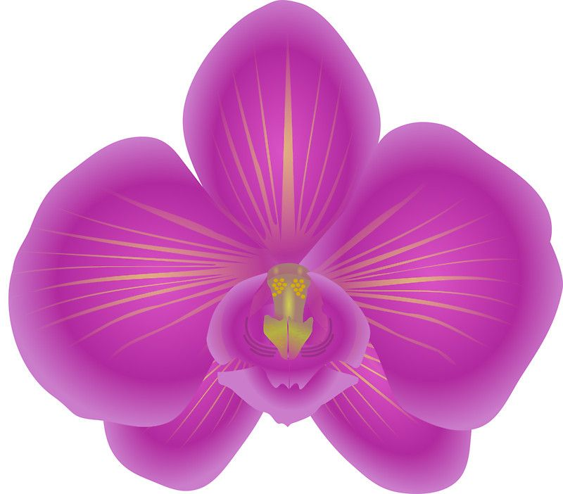 svg freeuse download Orchid clipart. Flower nature plant sticker.