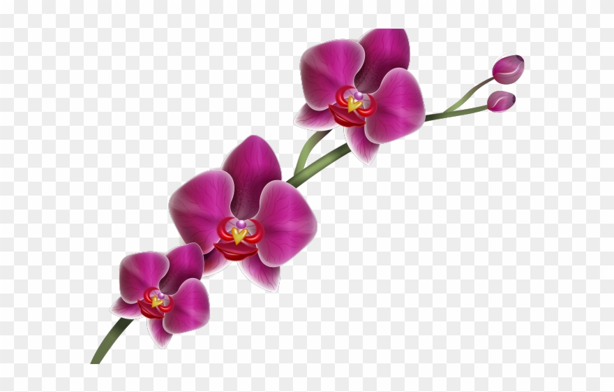 banner freeuse Orchid clipart. Hawaiian png transparent