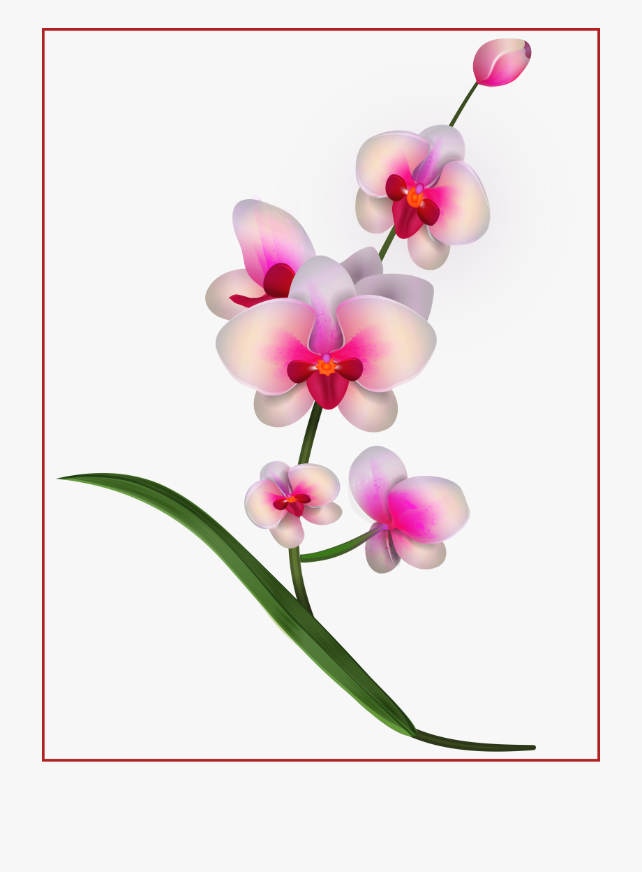 freeuse stock At getdrawings com free. Orchid clipart.
