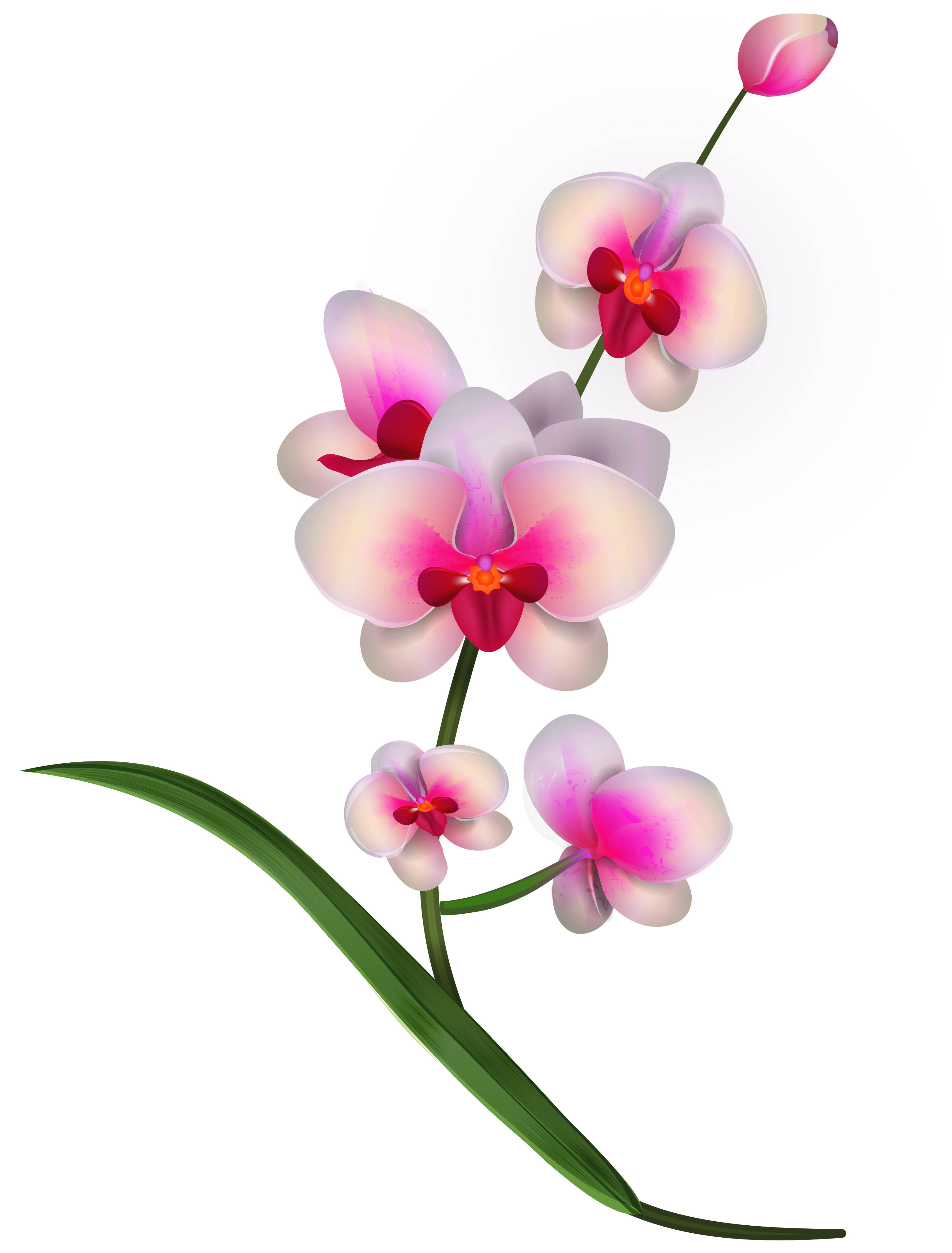 banner free stock Orchid clipart. Free cliparts download clip
