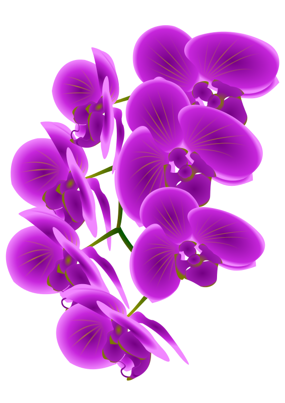 image royalty free library Orchid clipart. Free cliparts download clip.