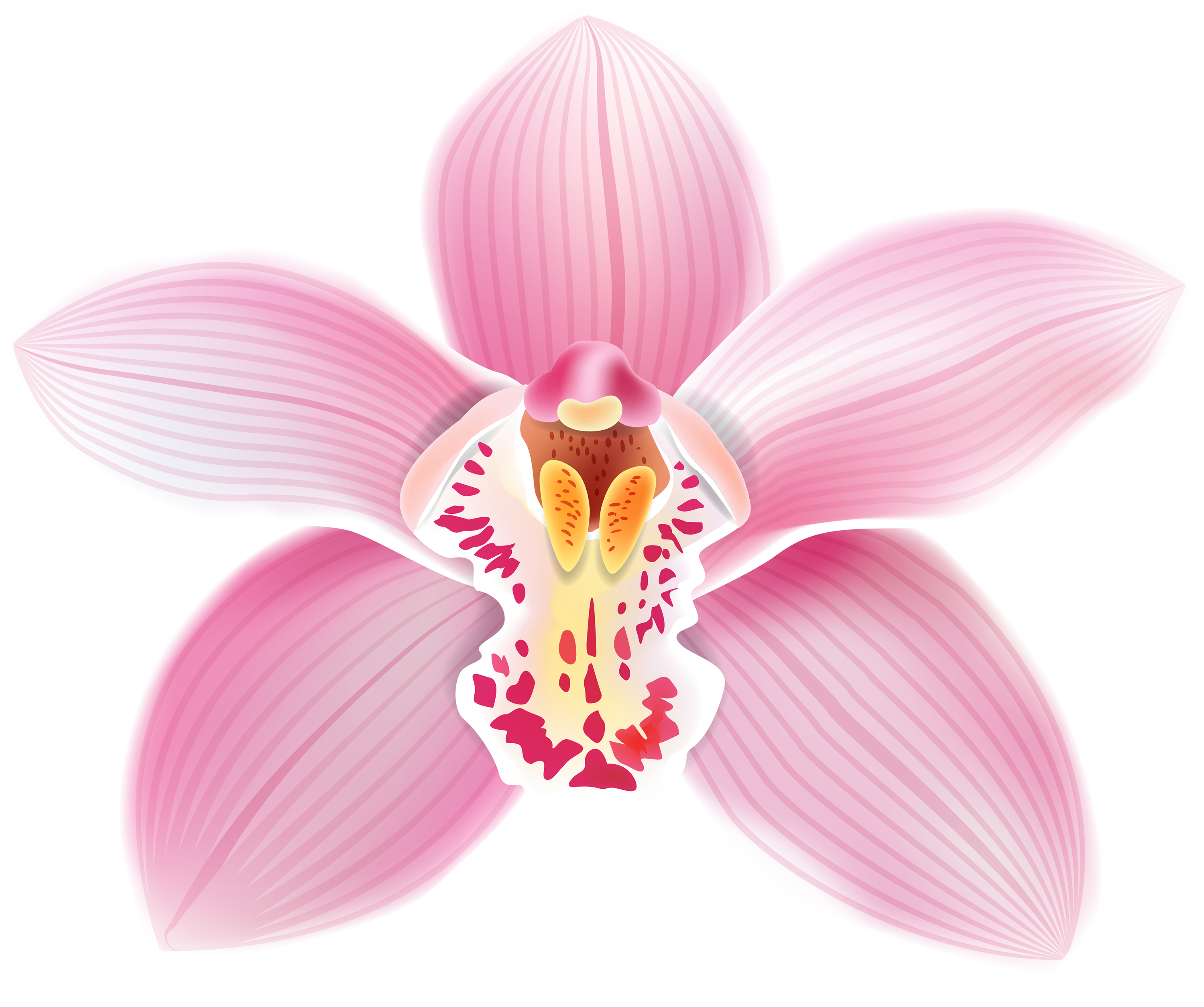 png black and white download Orchid clipart. Pink png best web.
