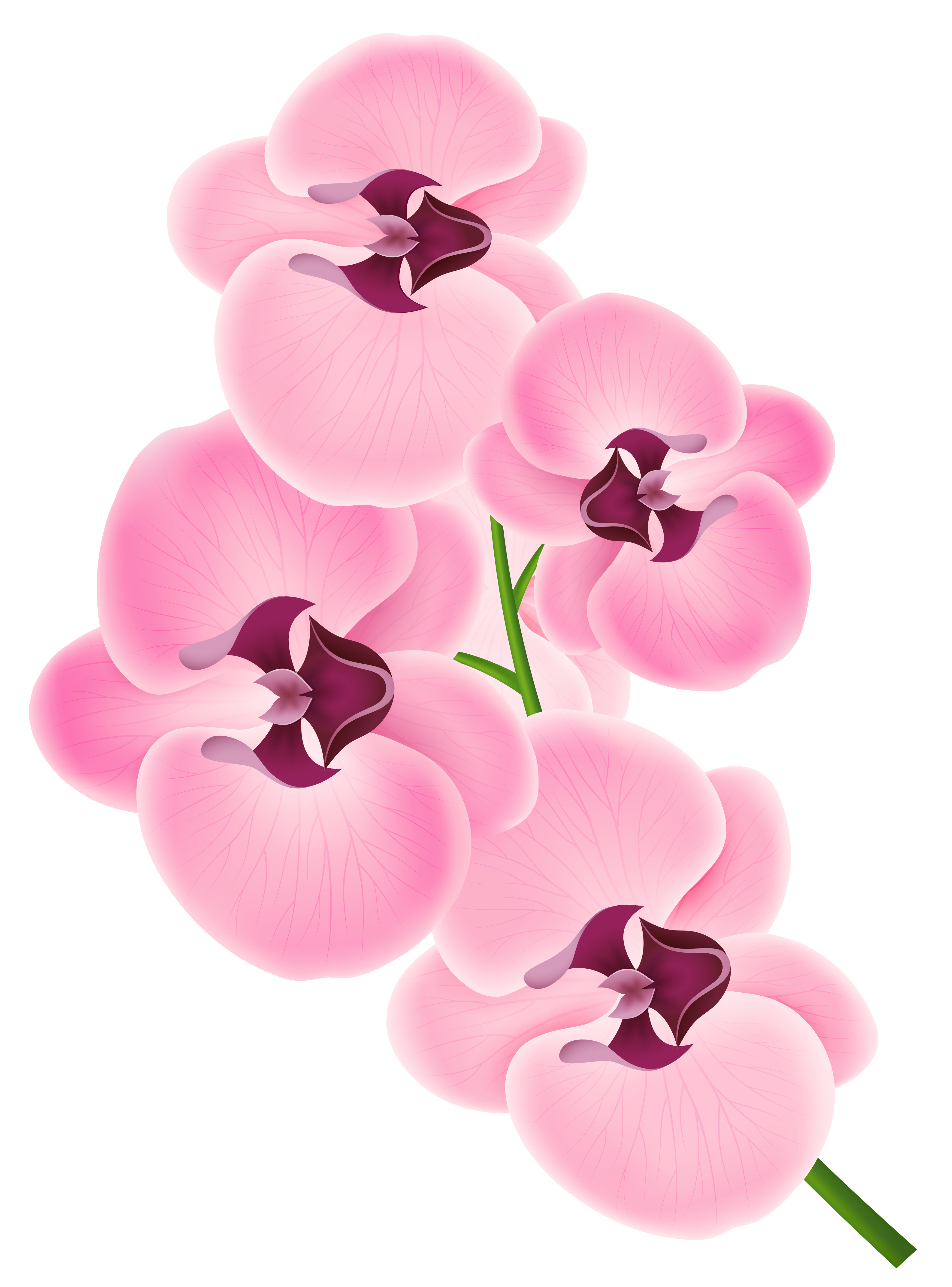 clipart royalty free download Free cliparts download clip. Orchid clipart