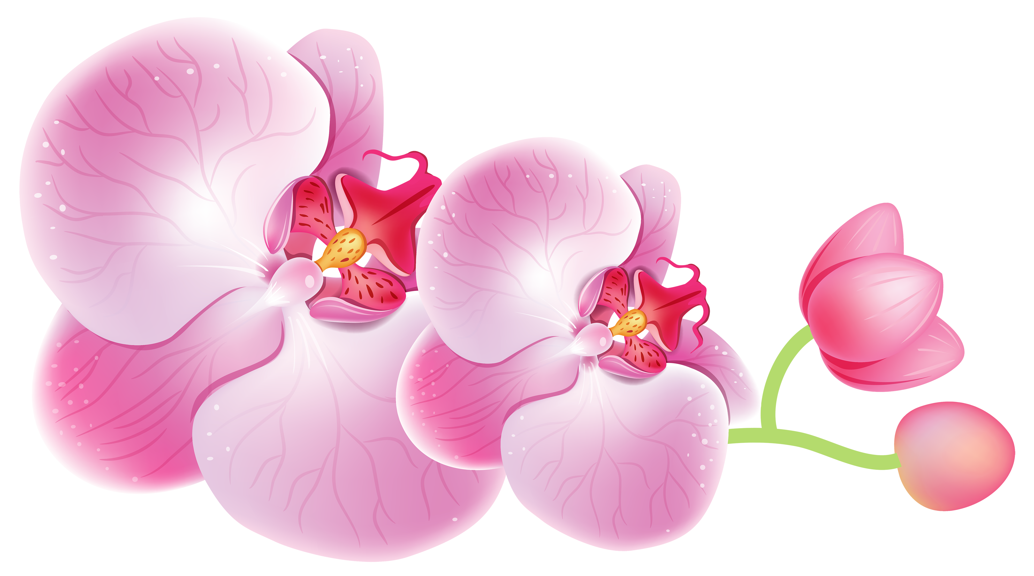 image library Orchids png best web. Orchid clipart.