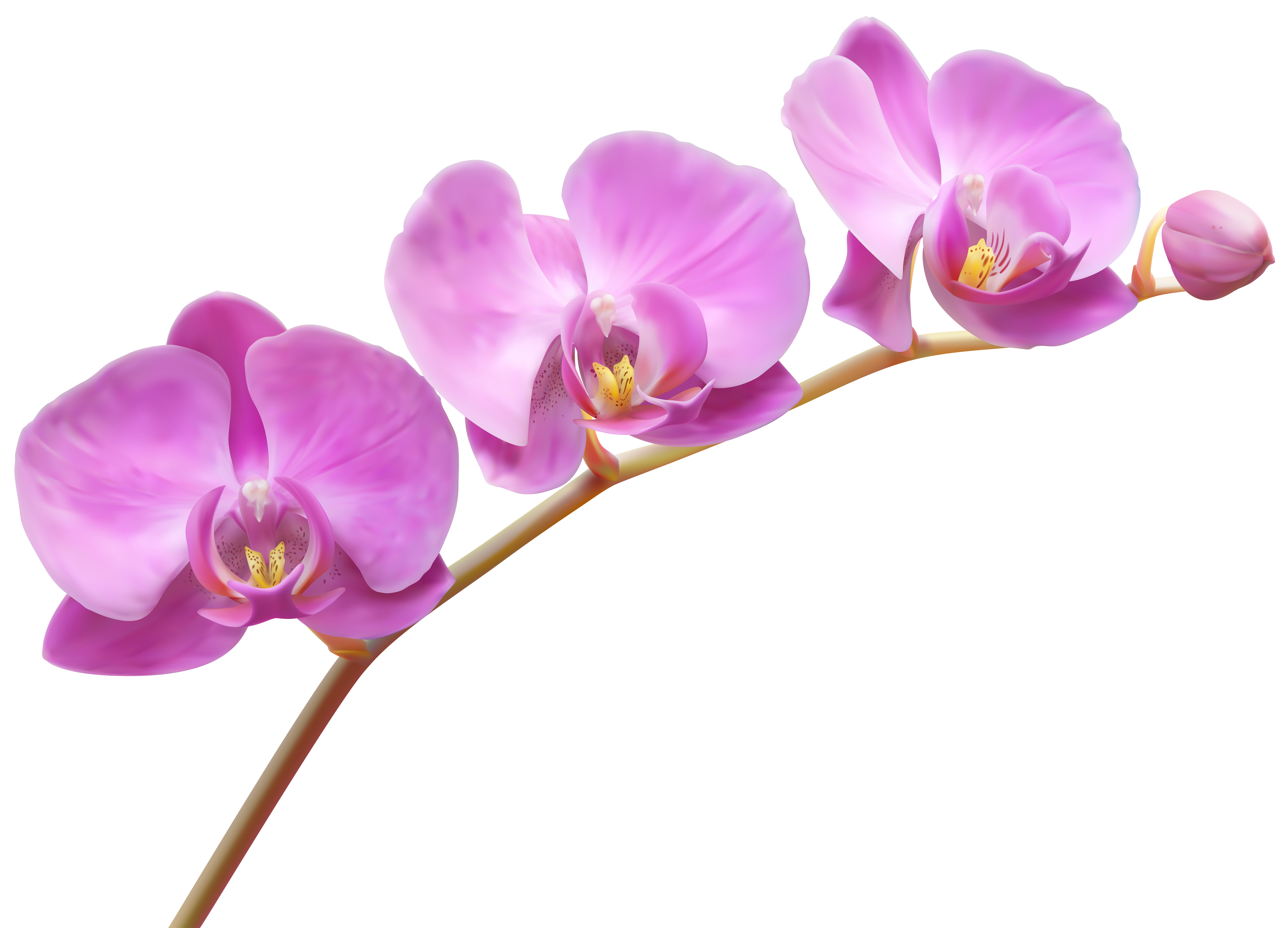 vector free Orchid clipart. Orchids transparent png clip.