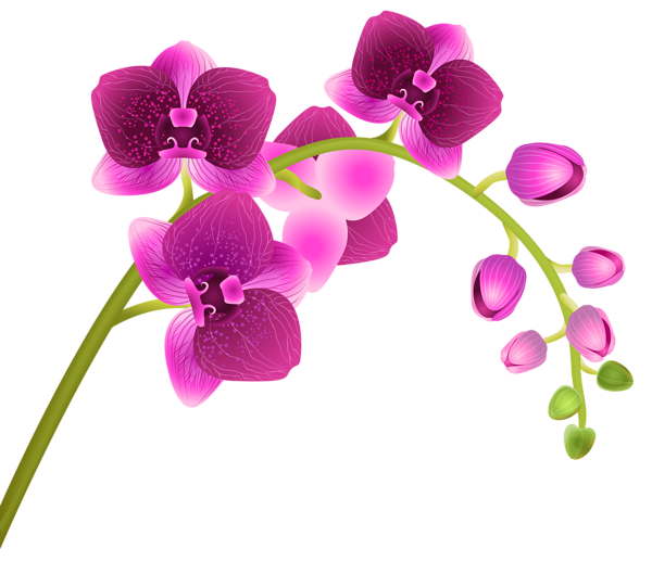 banner freeuse download Orchid Flower Transparent PNG Clip Art Image