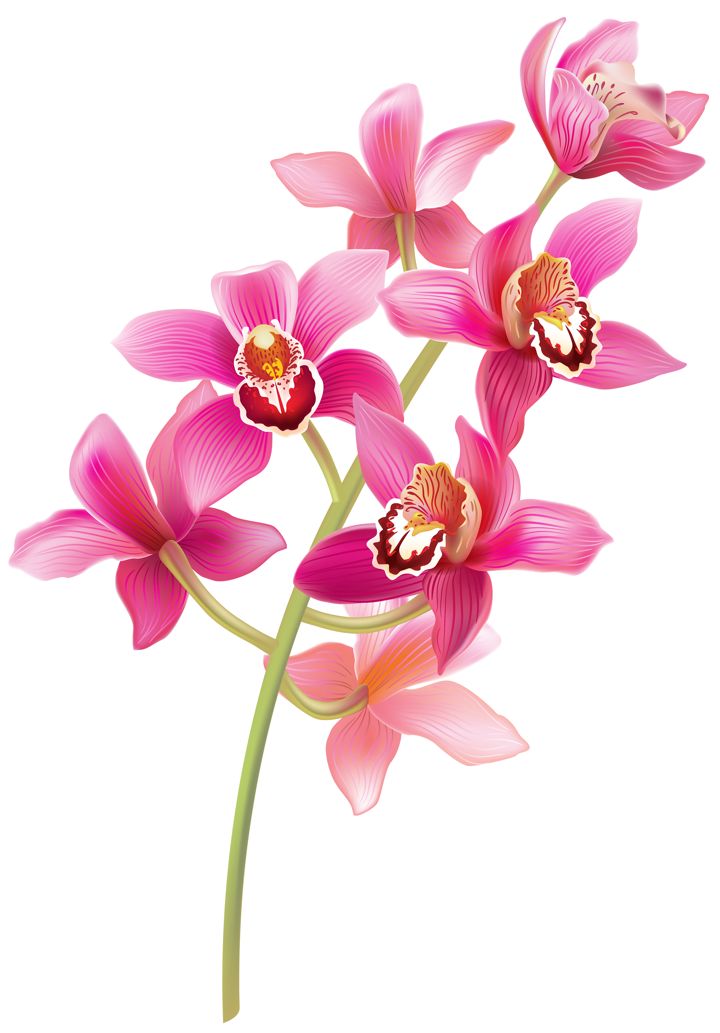 picture royalty free Stem Pink Orchids PNG Clipart