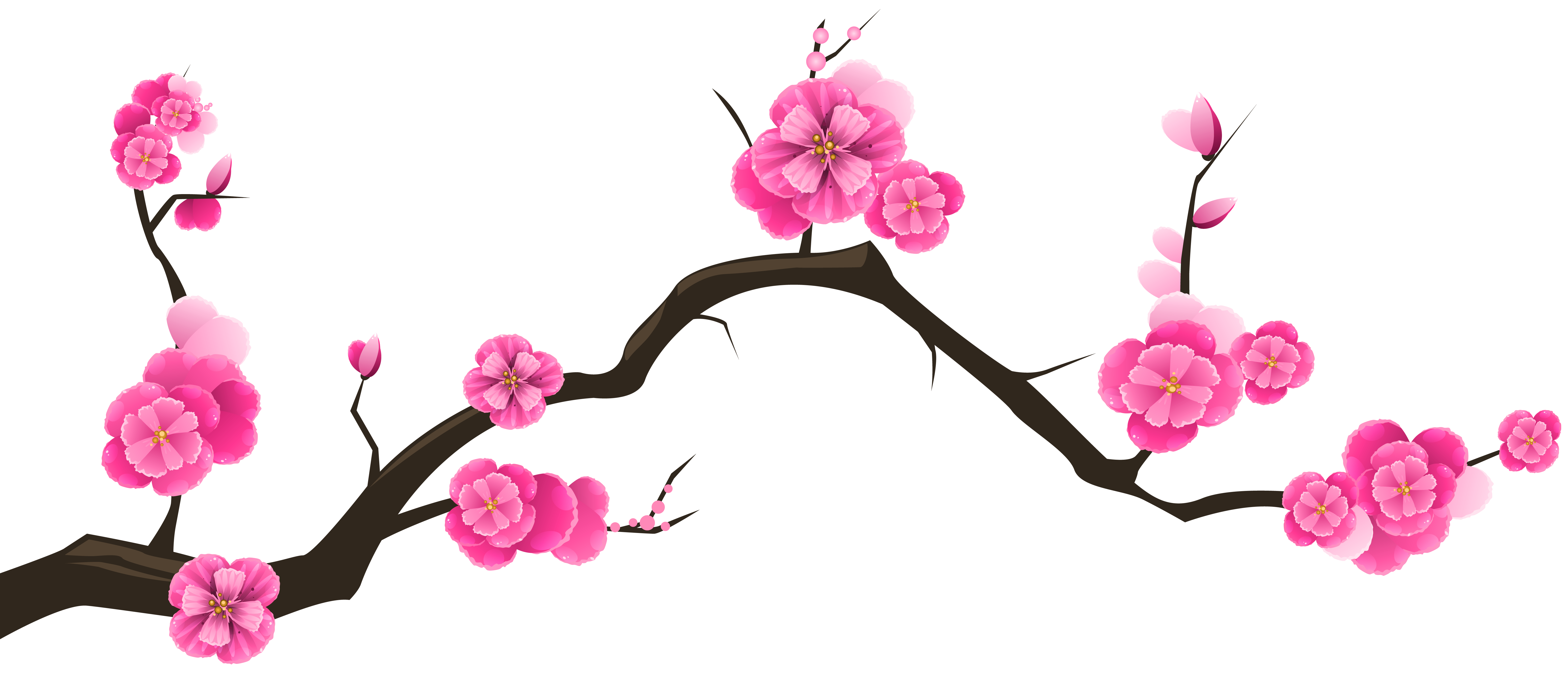 banner transparent stock Orchid flower at getdrawings. Spa flowers clipart